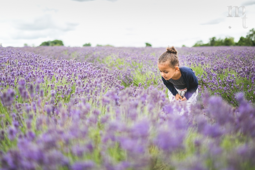 MTP_lavenderfarm_1