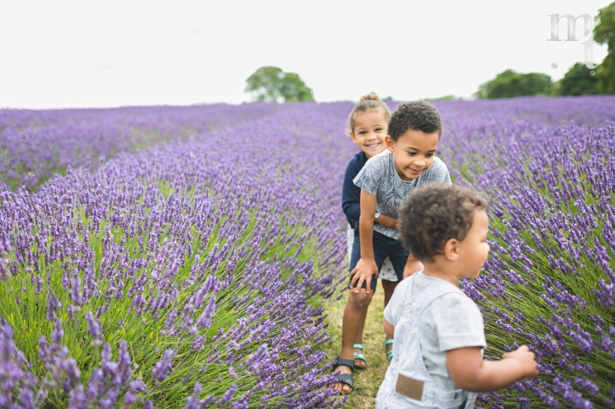 MTP_lavenderfarm_12