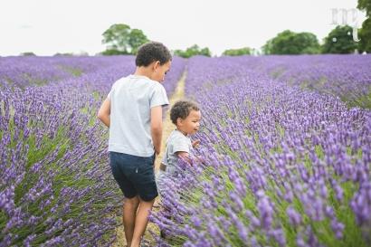 MTP_lavenderfarm_13