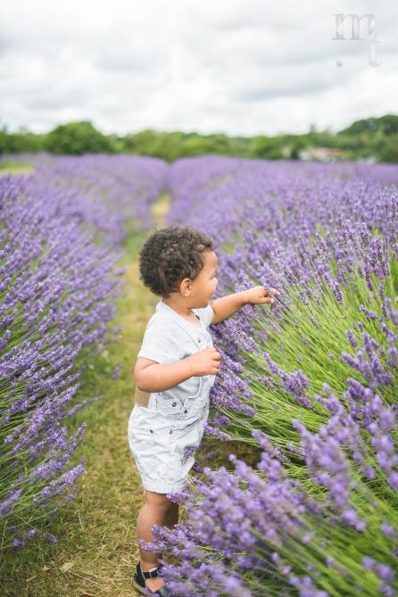 MTP_lavenderfarm_5