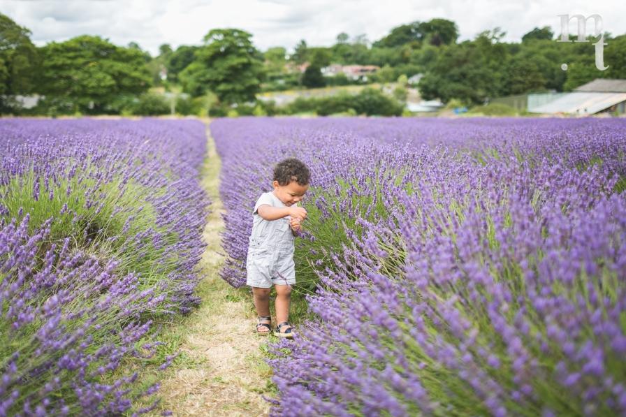 MTP_lavenderfarm_9